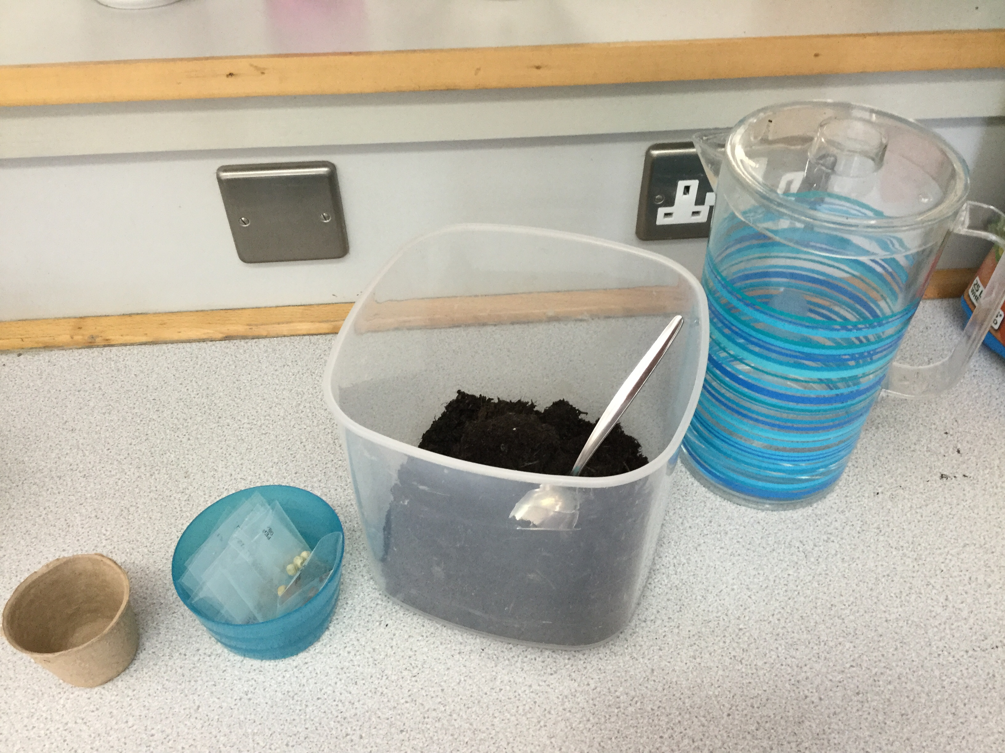 Y1 ready to plant seeds in Science